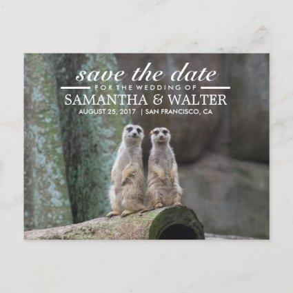 Adorable Meerkats Save The Date Announcement