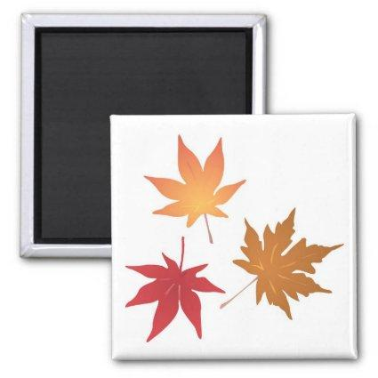 Autumn Maple Leaves Collection Magnets