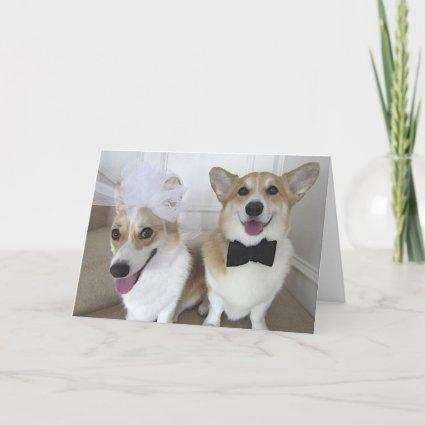corgis dressed up as bride and groom Cards