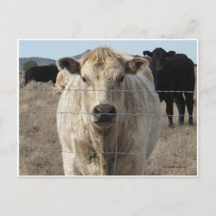 "It's a Roundup! Cattle - Western ""Save the Date"" Announcement"