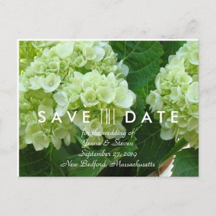 Pale Green Hydrangea Save the Date Cards