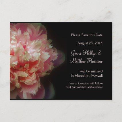 Peony Flowers Wedding Announcements Cards