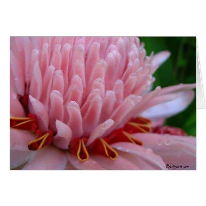 Pink Torch Ginger Wedding