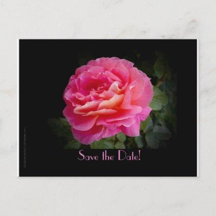 Save the Date 50th Anniversary Party Pink Rose Announcement
