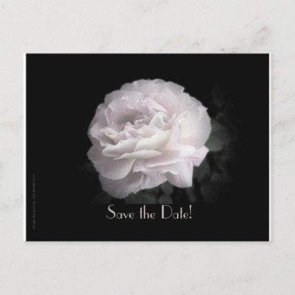 Save the Date Vow Renewal Ceremony Pale Pink Rose Announcements
