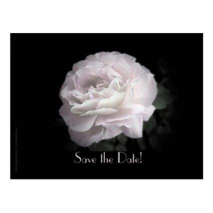 Vow Renewal Ceremony Pale Pink Rose Cards