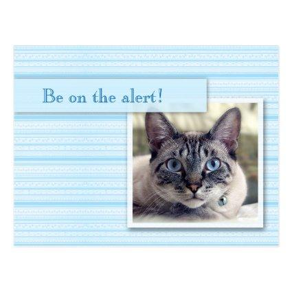 with a Wide-eyed Cat Cards