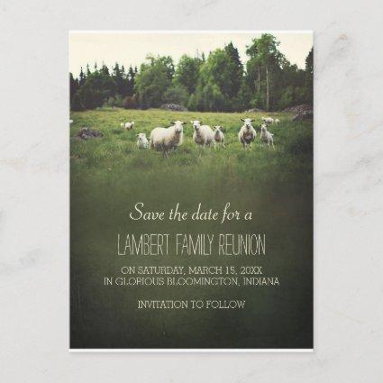 Sheep on Pasture | Family Reunion Save the Date Announcement