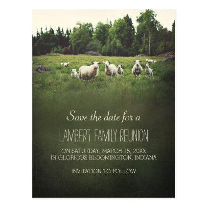 Sheep on Pasture | Family Reunion